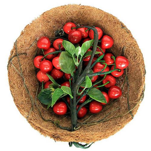 nurture the living fruit basket / Hyunhee Hwang